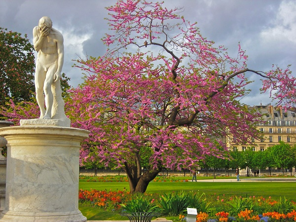 Jardin des tuileries il giardino pubblico pi famoso di - Terrasse des feuillants jardin des tuileries ...